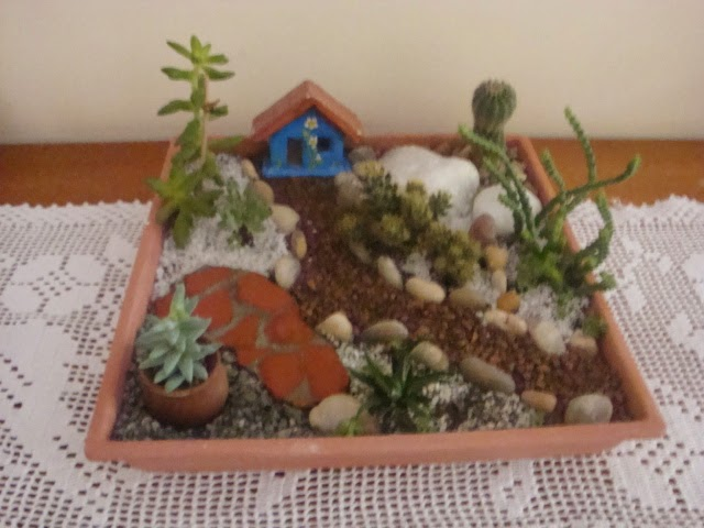 Mini-jardim de cactos e suculentas.